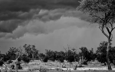 Impala Brace For The Storm