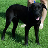 Black Jack posing for the camera in hopes to find a forever home. FOUND IT ;-)