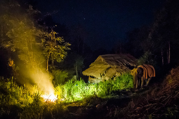 "The elderly Boon Thong keeping warm with her blanket and fire, resting under the stars - Dec 2013<br /> <br /> All print proceeds go to BLES, who care for all these rescued elephants.<br /> <a href=""http://www.blesele.org"">http://www.blesele.org</a>"