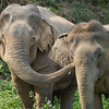 "Somai shares a moment with Pang Tong - Feb 2013<br /> <br /> All print proceeds go to BLES, who care for all these rescued elephants.<br />  <a href=""http://www.blesele.org"">http://www.blesele.org</a>"