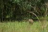 08-29-2009 - Bobcat cub