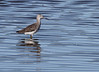 Greater? Yellowlegs