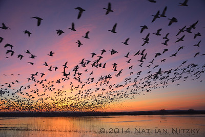 Blastoff from the Flight Deck, Bosque del Apache