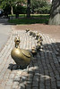 Row of bronze ducks in tribute to Robert McCloskey's children's story: Make Way for Ducklings.