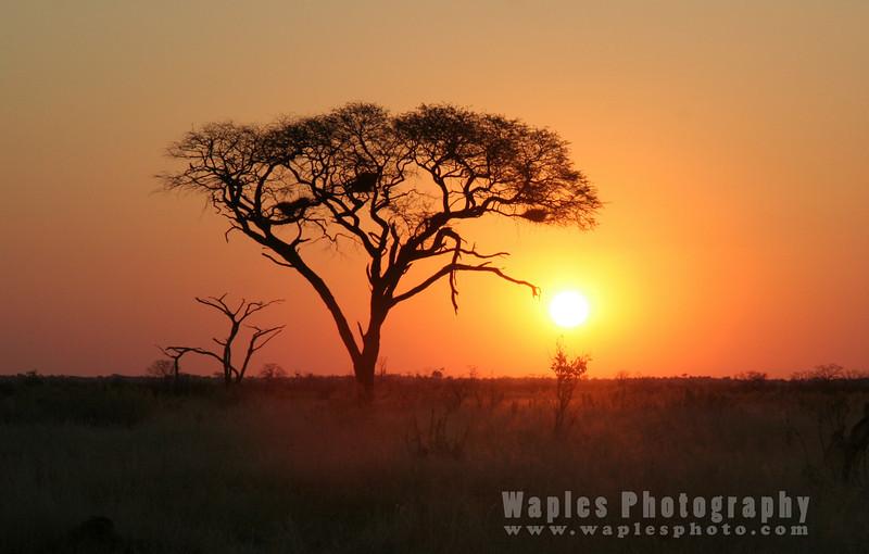 Another Stunning Sunset, Savuti