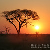 Another Stunning Sunset, Savuti