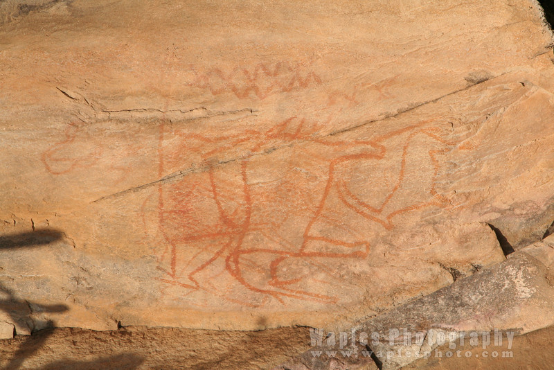 Bushman Paintings of Animals