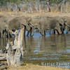 Waterhole full with Ellies