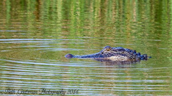 Brazoria National Wildlife Refuge 2014
