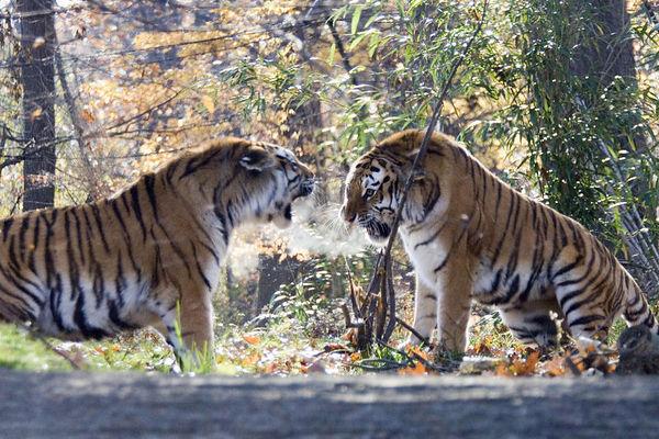 Bronx Zoo - Nov 2005