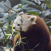 Bronx Zoo - Nov 2005