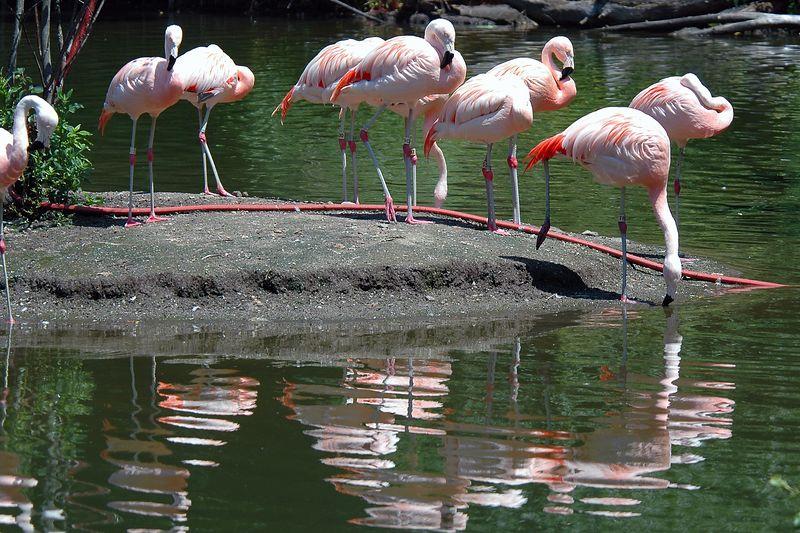 Bronx Zoo - Summer 2005
