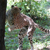 Bronx Zoo - Summer 2005
