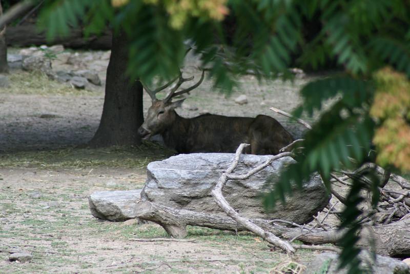 Bronx_Zoo-10