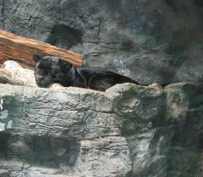 Bronx_Zoo-33