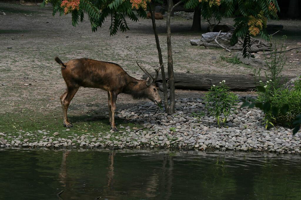 Bronx_Zoo-9