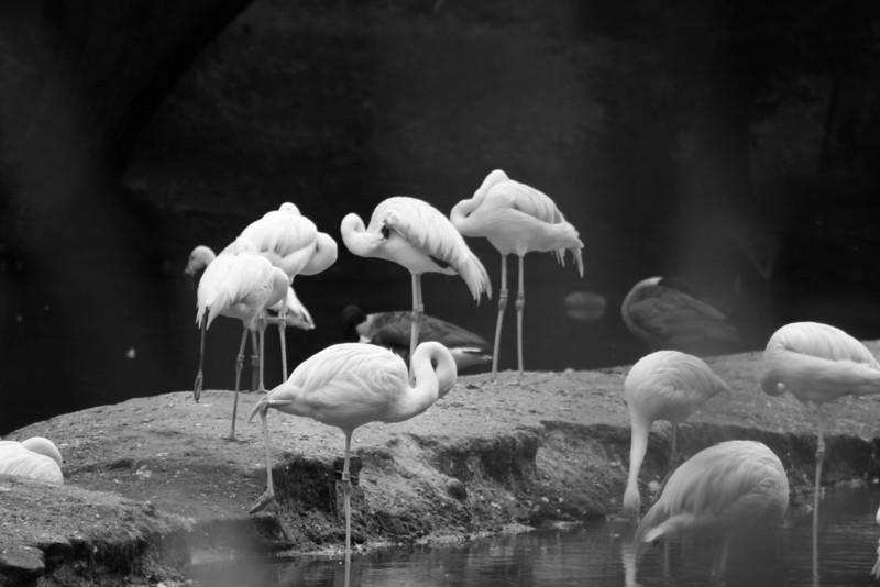 Bronx_Zoo-37