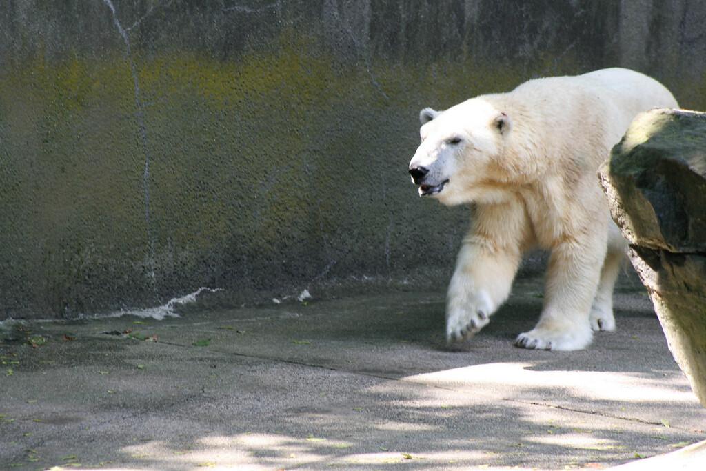 Bronx_Zoo-22