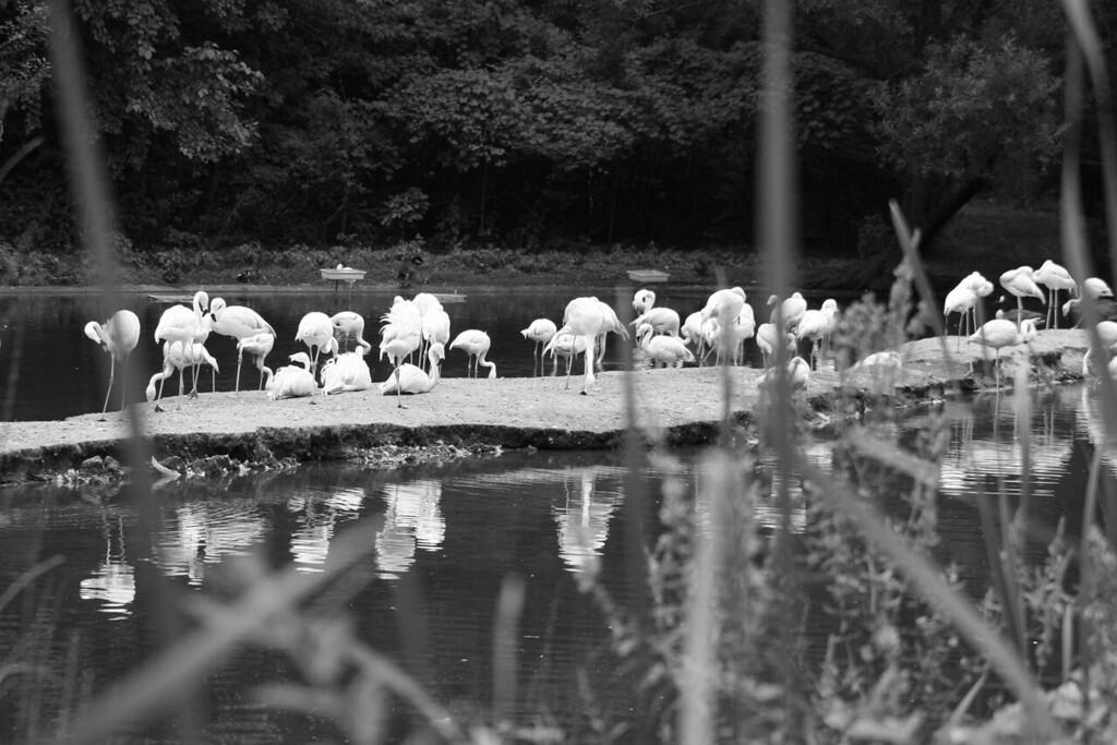 Bronx_Zoo-36