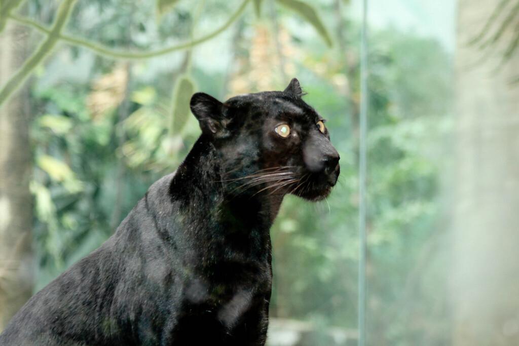 Bronx_Zoo-34