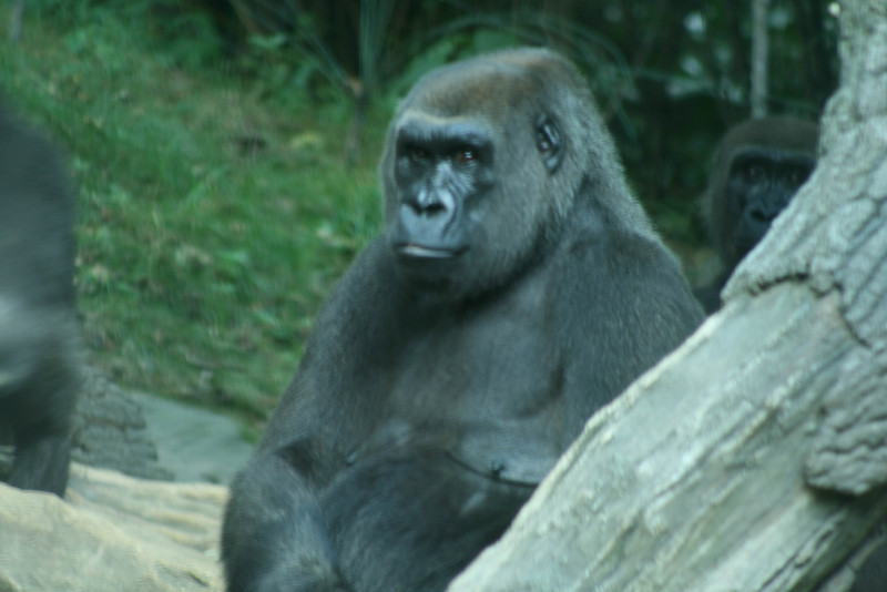 Bronx_Zoo-39
