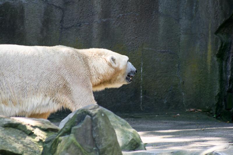 Bronx_Zoo-17