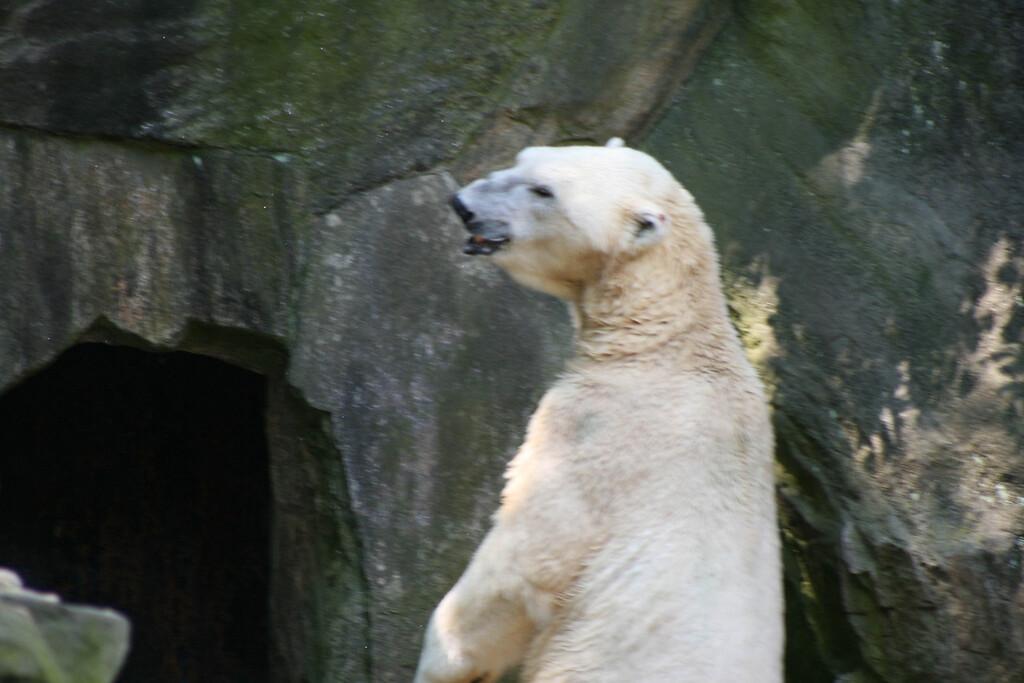 Bronx_Zoo-20