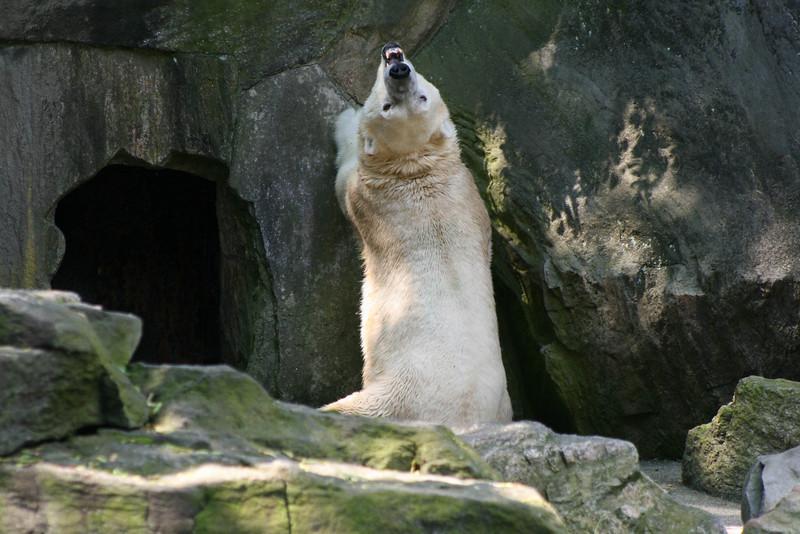 Bronx_Zoo-21