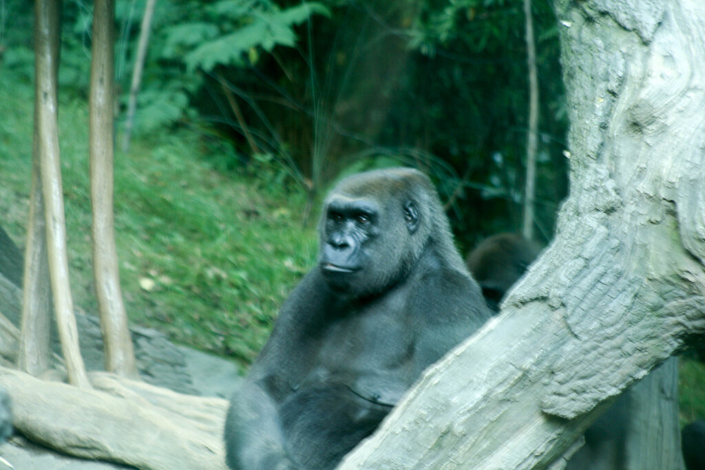Bronx_Zoo-38