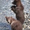 Snowball's Cubs