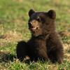 I am the cutest little bear in the world (April 6th)
