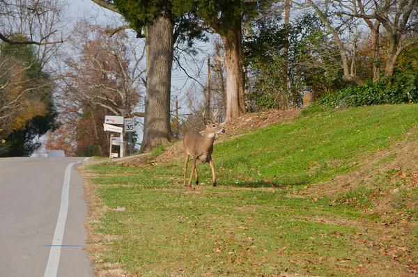 Buck in Kentucky