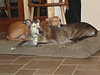 Its rare for Peek-a-boo and Buck to share anything, much less a dog bed...this was a moment to preserve.