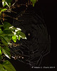 A spider web at our house with a spider in the middle illuminated by the spotlight on our garage at night