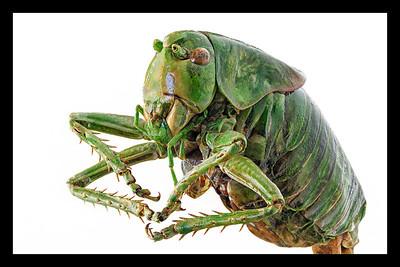 Alien Grasshopper