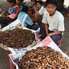 snack on these cockroaches in Burma