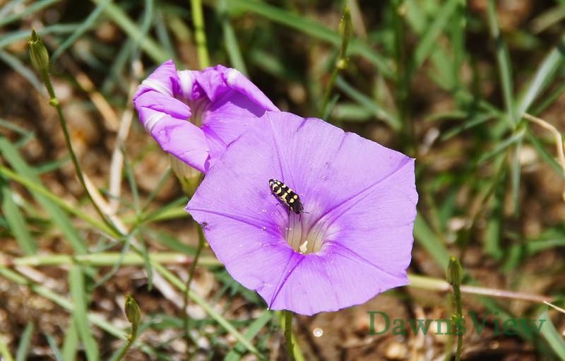 Bug of some sort on flower in Tucson, AZ September 11, 2011