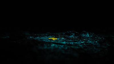 Bioluminescent lichen