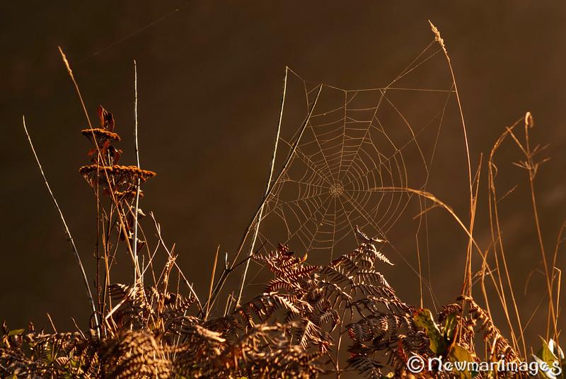 Windswept Web