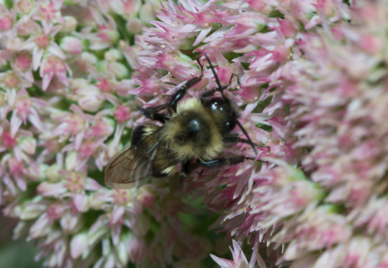 Bees-0226