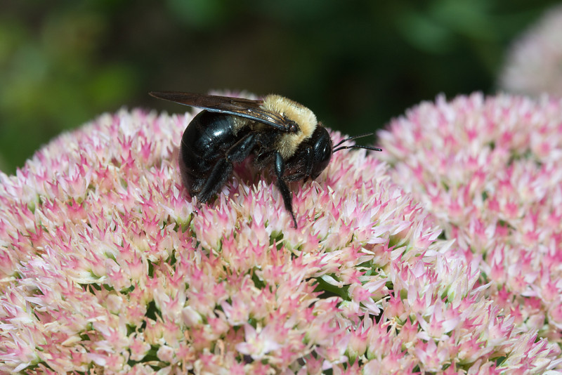 Bees-0225