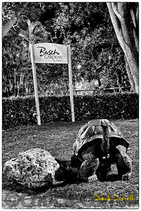 Bush Gardens Overnight With Photo Experience – January 2012