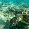 Turtle underwater