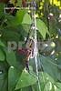 Garden Spider 2005 strand small