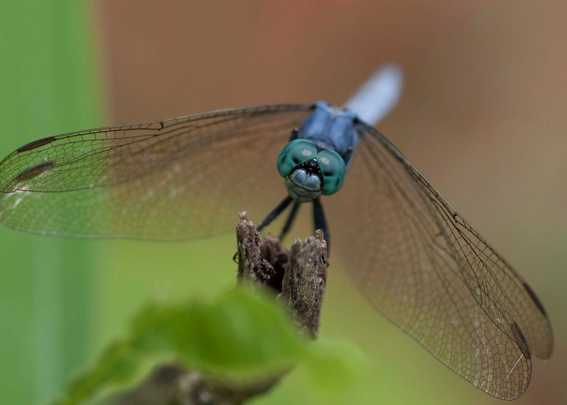 a closeup of a dragonfly