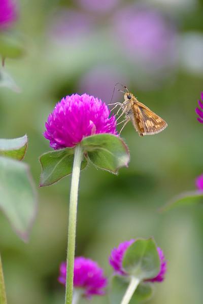 Moth on Pink
