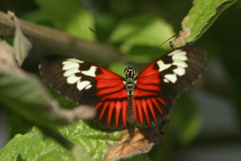 Butterfly World, Ft. Lauderdale