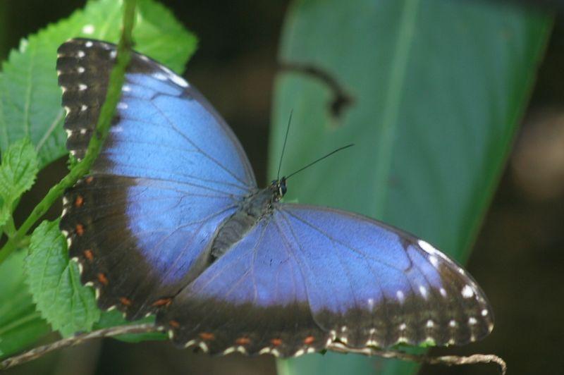 Butterfly World, Ft. Lauderdale (December, 2002)