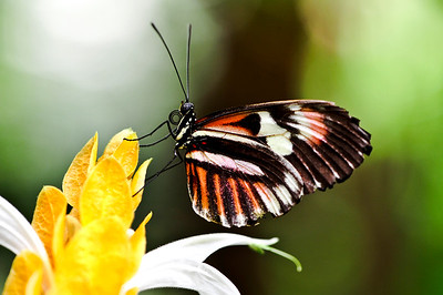 Butterfly Place - Westford MA.