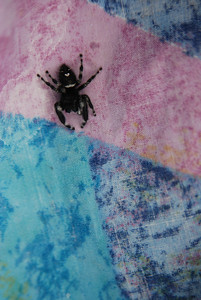 Juming spider on sheet.